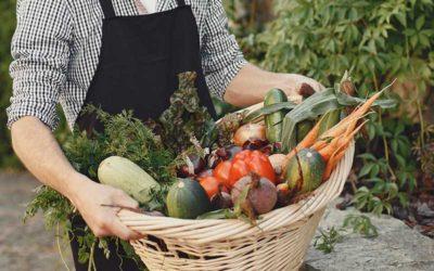 « Du jardin à l'assiette »